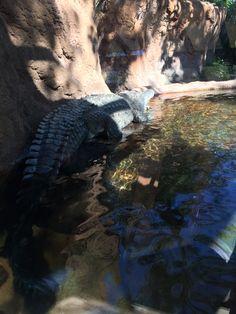 Zoo Miami cocodrilo