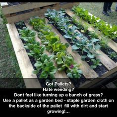 Have todo this def have plenty of pallets! Pallet garden.