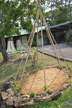 This teepee garden is our most ambitious garden. We're planting fruits like passion fruit around to provide long term coverage.