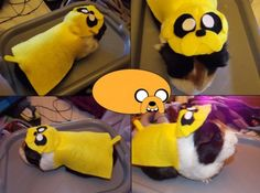 Funtomato   Funny guinea pigs
