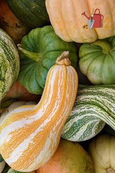Celebrate fall with these fun and funky pumpkins and gourds! Grown by Appalachian farmers.