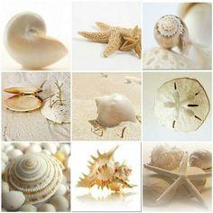 Seashells, collage