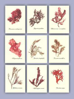 Seaweed art MADE to ORDER miniature Seaweed Herbarium | Etsy Paper Making Process, Clean Ocean, Sea Plants, Sea Vegetables, How To Age Paper, Nautical Art, Botanical Art, Botanical Flowers, Seaweed