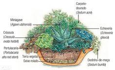 Plantas dentro de casa: quais são as espécies ideais - Casa