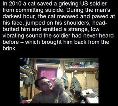 They say one good deed deserves another and it certainly seems to be the case in this heart-warming story, that began in the battlefields of Afghanistan in When Staff Sgt. Crazy Cat Lady, Crazy Cats, Funny Animals, Cute Animals, Animal Fun, Animal Facts, Cat Facts, Wtf Fun Facts, Random Facts