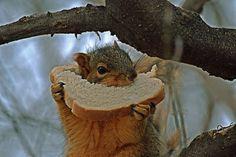 https://flic.kr/p/QtN74L | Squirrel snacking
