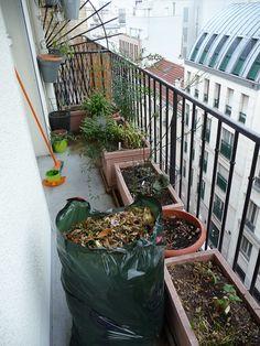 Tailles et nettoyage sur mon balcon http://www.pariscotejardin.fr/2014/01/tailles-et-nettoyage-sur-mon-balcon/