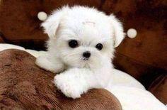 Cute white pup