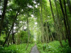 the walk to Watmough Bay