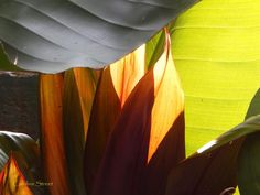 Nature in Abstract 1 by carolinestreet