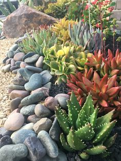 Pebbles and Lava Rock with Succulents