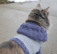 Make your feline friend a hoodie to wear.  Cats get cold too, so use this free knitting pattern to keep them warm.  This is great for prancing in the snow outside (if you're brave to let your cat out of the house!)
