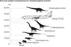 How Big Was the Biggest Dinosaur Ever?