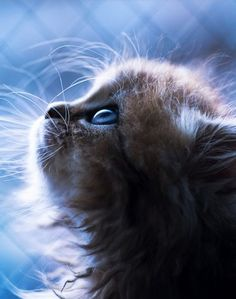 This kitten appears to be praying. Since they are Gods creatures of mercy on Earth, it could be true. Maybe it's asking advice for helping a human's problem.