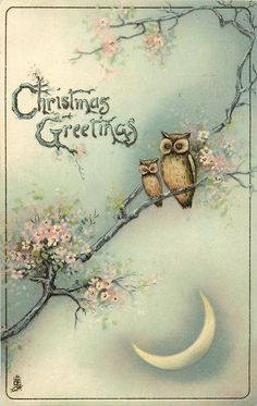 CHRISTMAS GREETINGS two owls in blossom tree, quarter moon