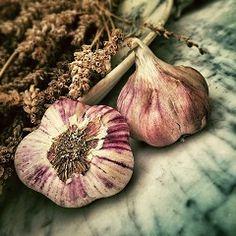 Los mejores secretos para cultivar y disfrutar de tu propio ajo…