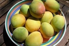 Summer is mango madness time in the tropics and what a year for mangoes. Mango Jam, Chutney, Preserves, Toast, Dairy, Yummy Food, Fruit, Sunshine Coast, Curries