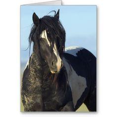Black & White Comes Close Wild Horse Greeting Card by Carol Walker http://www.zazzle.com/savewildhorses?