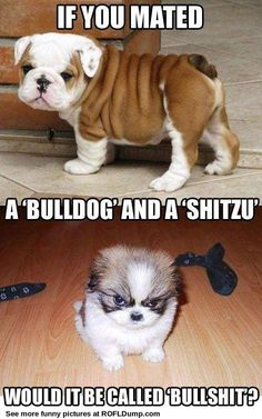 Bullshit...... I GOTS ME ONE OF THESE... the coolest dog around !!!