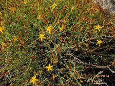βαλσαμόχορτο-σπαθόχορτο Herbal Medicine, Herbalism, Home And Garden, Herbs, Backyard, Health, Plants, Gardening, Rose
