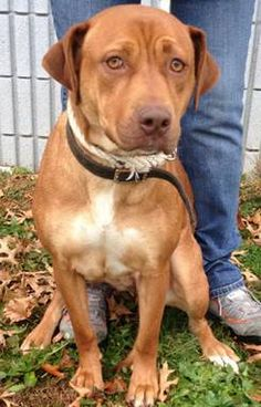 URGENT- REA IS IN A RURAL GASSING SHELTER IN BECKLEY WEST VIRGINIA-Rea is a sweetheart! We love her  she's great with dogs and very playful and loving! . TRANSPORT IS AVAILABLE FOR APPROVED OUT OF STATE ADOPTIONS. PLEASE CONTACT ME TO  LEARN MORE...