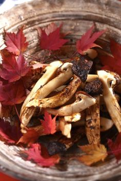 Matsutake mushrooms are much-prized delicacy in Japan. So expensive.