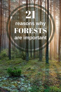 Forests cover a third of all land on Earth, providing vital organic infrastructure for some of the planet's densest, most diverse collections of life.