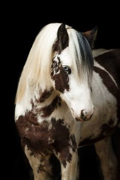 Irish Cob Stallion DiePferdefotograf… ǀ Friederike Scheytt, Germany Heart of … Irish Cob Stallion DiePferdefotograf… ǀ Friederike Scheytt, Germany Heart of a Horse - Art Of Equitation Cute Horses, Pretty Horses, Horse Love, Horse Photos, Horse Pictures, Animal Pictures, Beautiful Creatures, Animals Beautiful, Animals And Pets