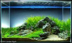 Haustierbedarf 60l Aquarium