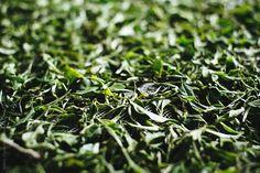 Freshly plucked tea leaves on the weathering troughs. Leaves, Tea, Plants, House, Home, Flora, Haus, Plant, Teas