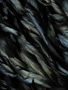#black #feathers  black look but lots of colours within it, metallic, shine.