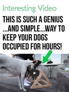 This is such a good idea. I need to try this with my pup! #dogs #funny