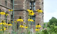The castle works as a beautiful background for these pretty yellow rudbeckias.  Copyright: Rosenborg Castle / Rosenborg Slot