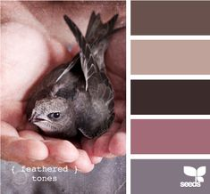 feathered tones ...first two are my bedroom colors and third color is my bathroom! thinking last should be my livingroom.... love it
