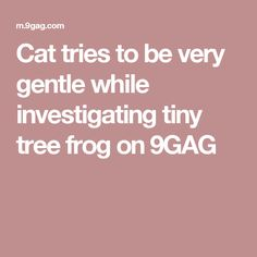 Cat tries to be very gentle while investigating tiny tree frog on 9GAG