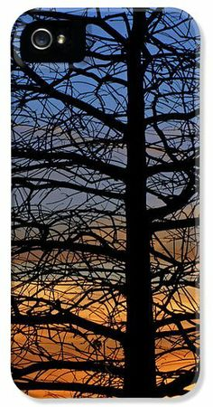 Tree at Sunset iPhone 5 Case / iPhone 5 Cover for Sale by Daniel Woodrum