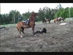 Jeździectwo.