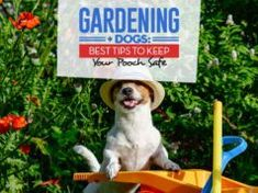 Gardening with Dogs: 9 Tips to Keep Pets Safe Home Remedies For Fleas, Flea Remedies, Horse Care Tips, Dog Care Tips, Homemade Flea Spray, Kill Fleas On Dogs, Dog Illnesses, Best Dog Food Brands, Dog Died