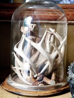 Antlers in a cloche by Camille Price @Loren Cline Carline   get will to save us some!