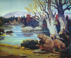 Castoroides ohioensis reached a length of up to 8 ft 2 in and an estimated weight of 130-220 lbs; It lived in North America during the Pleistocene epoch and went extinct at the end of the last Ice Age, 12,000 years ago. Beavers the size of black bears.