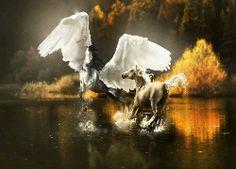 Konie, Woda, Drzewa