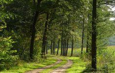 road képek, erdő háttérképek, természetfotók, fák hátterek ...