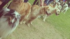#DOG LOOK AT ME BOYS!