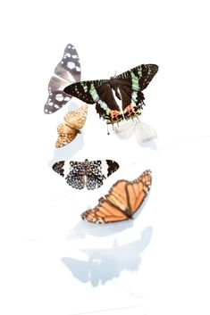 Kateri Ewing is creating Art Lessons in Watercolour, Ink and Graphite Butterfly Photos, Butterfly Wallpaper, Butterfly Print, Butterfly Painting, Free Pictures, Free Images, Free High Resolution Photos, Photoshop, Behance