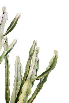 the prettiest cactus