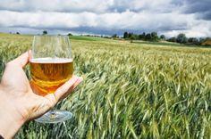 La ricerca della qualità di Tenute Ducali passa attraverso la coltivazione diretta dei luppoli e dei cereali per la produzione delle birre.
