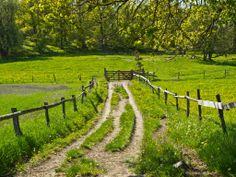 Champs, Kingdom Of Sweden, The Road Not Taken, Summer Cabins, Sweden Travel, Felder, Farm Gardens, Culture Travel, Stockholm
