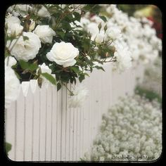 Dream cottage with white roses on a white picket fence. by Maite Rovira