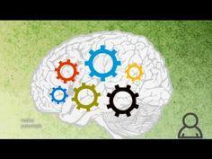 Redes 114: De las inteligencias múltiples a la educación personalizada - psicología - YouTube