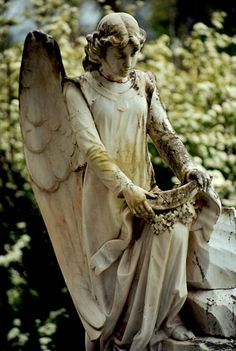All I see here is a weeping angel. Cemetery Angels, Cemetery Art, Entertaining Angels, Sacred Garden, Angel Sculpture, I Believe In Angels, Garden Angels, Angels Among Us, Angel Statues